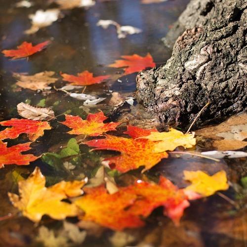 autumn-2900166_1920 (2)új.jpg