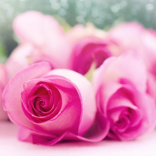 pink-roses-2191632_1920ÚJ.jpg
