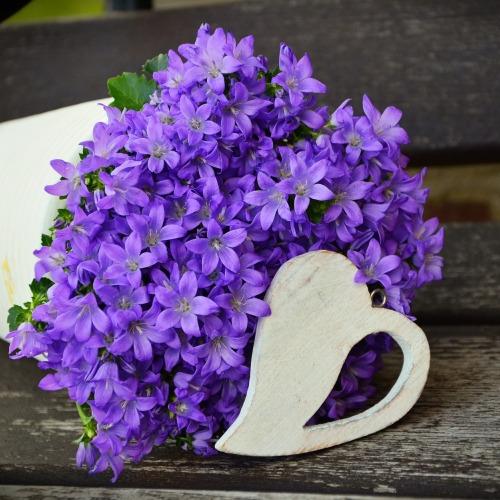 flowerpot-1372450_1920új.jpg