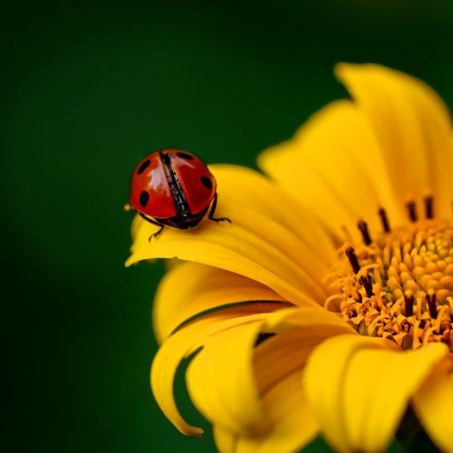 ladybug-3475779_1920új.jpg