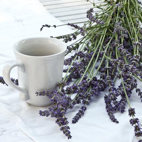 lavender-1636567_1920új.jpg