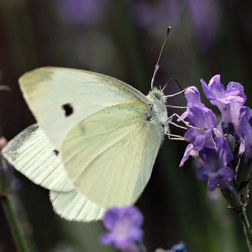 butterfly-3478925_1920új.jpg