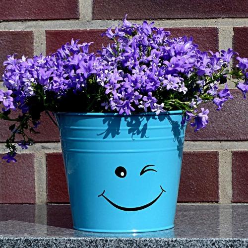 flowerpot-2332678_1920új.jpg
